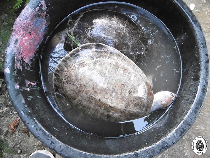 trafico_fauna_silvestre_vado_yurimaguas_loreto_actualidad_ambiental_9