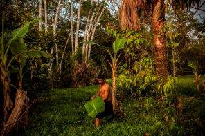 Dagoberto saca una hoja de árbol de plátano para envolver el pescado que asará en la parrilla. Además de pescar, Dagoberto y su familia cultivan lo necesario para comer en una pequeña chacra cerca de su casa.