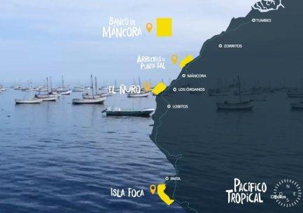 El Servicio Nacional de Áreas Naturales Protegidas se encuentra trabajando una propuesta para conservar 116,139.95 hectáreas marinas que se concentran en cuatro zonas: El Ñuro, Isla Foca, Arrecifes de Punta Sal y el Banco de Máncora.