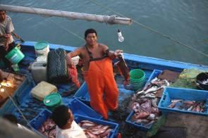 Las embarcaciones con pescado fresco desembarcan en el puerto de Órganos. La mayoría de la carga será destinada al consumo humano de las localidades cercanas.