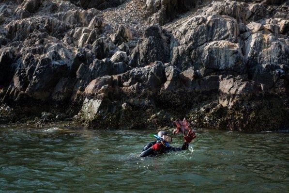 Frente a la bahía de Chimbote se encuentra la Isla Blanca. En las aguas que la rodean, todos los días se sumergen buzos para sacar pulpos.