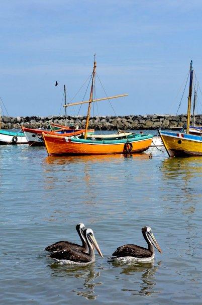 Pesca artesanal. En la zona se puede observar cómo los habitantes del lugar realizan estas actividades de pesca con prácticas ancestrales en estas aguas que albergan más del 70% de especies marinas del Perú. Especies comerciales como la langosta verde, el pulpo, calamar, cabrilla, lenguado, mero, entre otros, son parte del ecosistema. Foto: Yuri Hooker