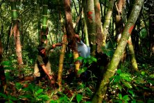 Estos proyectos tienen un gran potencial de crecimiento ya que actualmente solo abarcan una octava parte del total de bosques resguardados en las ANP a nivel nacional. Foto: Thomas Müller / SPDA.