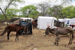 Los animales de granja y sus dueños permanecieron en esta loma de Molino Azul.