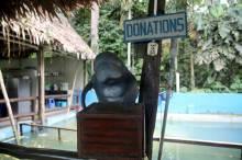 Al momento de pagar su entrada, cada visitante ya está contribuyendo con el CREA. Sin embargo, también existe la posibilidad de seguir contribuyendo con esta labor. Puedes colaborar a través de esta caja de donaciones o puedes depositar a las cuentas de CREA que aparecen en su página: www.centroderescateamazonico.com