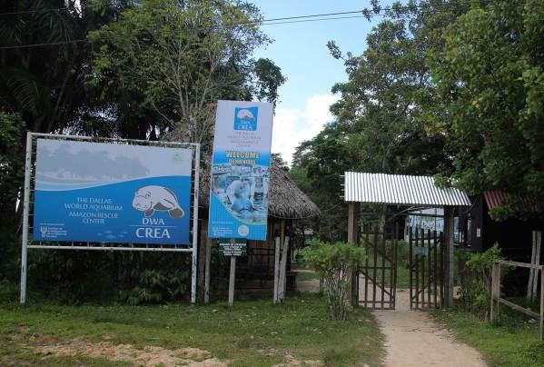 Desde el 2007, el Centro de Rescate Amazónico (CREA) realiza una loable labor: rescata, rehabilita y regresa a su hábitat a especies amenazadas de la Amazonía. El centro es reconocido sobre todo porque trabaja con manatíes, especies vulnerables que son cazados por su carne o para ser comercializados como mascotas.
