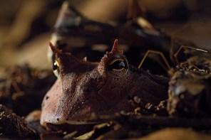 Cerca de 3 millones de soles se benefician cada año las poblaciones ubicadas en la zona de amortiguamiento del Parque Nacional del Manu mediante el aprovechamiento de uno de los servicios ecosistémicos: el arrastre de gigantes árboles en el río Manu. Foto: Christian Quispe / Sernanp