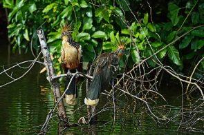 Al interior del Parque Nacional del Manu habitan comunidades nativas que conservan sus costumbres, a la par que apuestan por emprendimientos económicos para mejorar su calidad de vida, como es el turismo. Foto: Christian Quispe / Sernanp