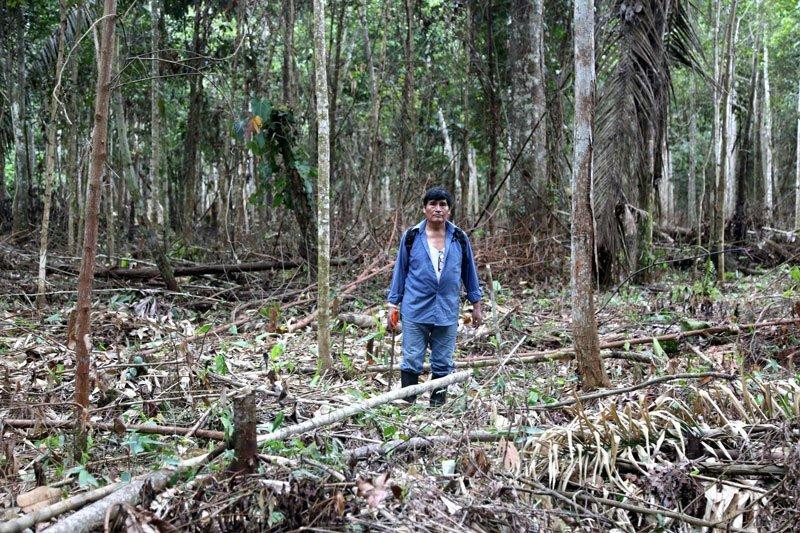El año pasado personas ajenas a la concesión talaron y quemaron varios árboles para intentar convertir el lugar en un terreno agrícola. Foto: Jaime Tranca / SPDA