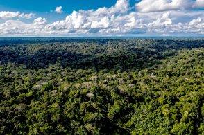 """Boca Pariamanu también es conocida porque en diciembre de 2017 denominó a 1800 hectáreas de sus bosques como """"Nihii Eupa Francisco"""" (Bosque Papa Francisco). Esto se dio justo un mes antes de la visita del Sumo Pontífice a Madre de Dios, una región golpeada por la degradación de sus bosques por la minería ilegal. Foto: Diego Pérez / SPDA"""