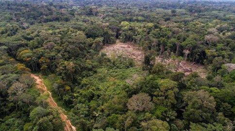 12.- Además de estar instalados en la zona, vienen realizando deforestación en diversos puntos de los bosques de la comunidad nativa Centro Arenal.