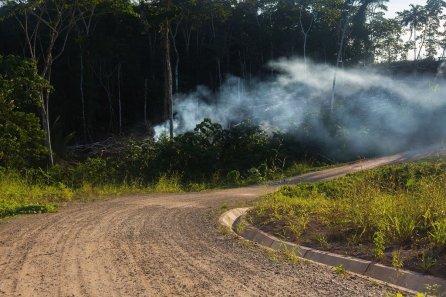 10. Además, se realizó tala y quema de bosques.