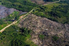 12. De la información pública obtenida por la Sociedad Peruana de Derecho Ambiental (SPDA), se observa que la construcción de esta carretera no habría contado con certificación ambiental ni autorización de desbosque aprobadas antes del inicio de obra.