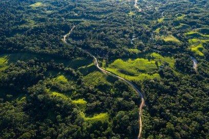 7. En la construcción de la primera parte se deforestaron más de 40 kilómetros, solo en el desbosque para la carretera.