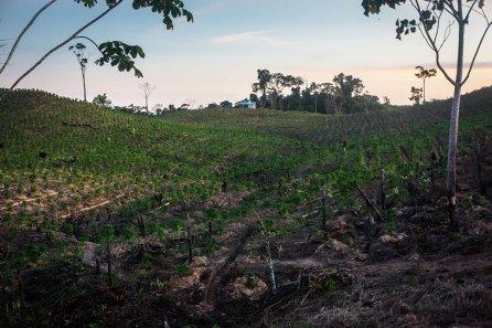 9. Para la siembra de papaya, plátano y maíz principalmente.