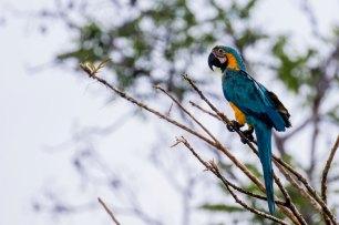 Suman a esta biodiversidad 362 especies de aves. Foto: Spectabilis/SPDA