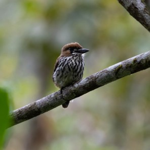 El ACR también es un sitio ideal para el avistamiento de aves. Foto: Diego Pérez | SPDA