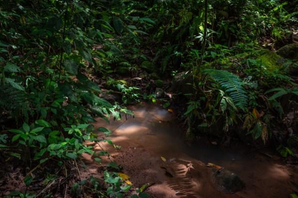 CC Pucallpillo. Huicungo, San Martín. Esta comunidad campesina se dedicaba al cultivo de coca hace más de una década, ahora su principal producto es el cacao orgánico. Esta se encuentra ubicada en la zona de amortiguamiento del Parque Nacional del Río Abiseo. Foto: Diego Pérez / GIZ
