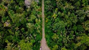 Juriko-Eilidh-Beth-Carretera-desde-drone-voces-en-la-carretera-reserva-de-la-biosfera-del-manu
