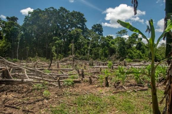 Juriko-Eilidh-Bethan-Deforestación-voces-en-la-carretera-reserva-de-la-biosfera-del-manu