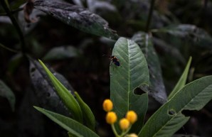 mariposa monarca - spda - diego perez