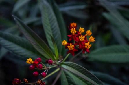 spda - flores - mariposa monarca - spda - diego perez