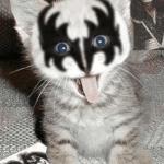 rock-cat