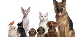 ¿Estás preparado para convivir con una mascota?