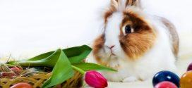 Consejos para el cuidado de tu conejo II