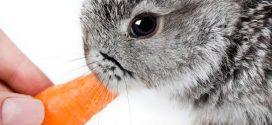 Consejos para el cuidado de tu conejo