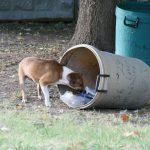 perro y basura