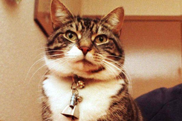 gato con cascabel