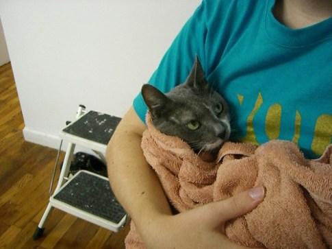 gato y pastilla