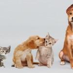concienciacion mascotas