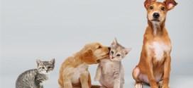 Anuncios sobre concienciación animal