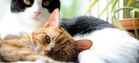 Protege el sistema inmune de tu gato con Purina Cat Chow Defense Plus
