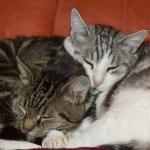 gatos cariñosos