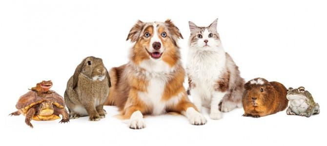 mascotas exoticas