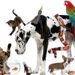 mascotas exóticas