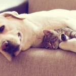 perra adopta gato