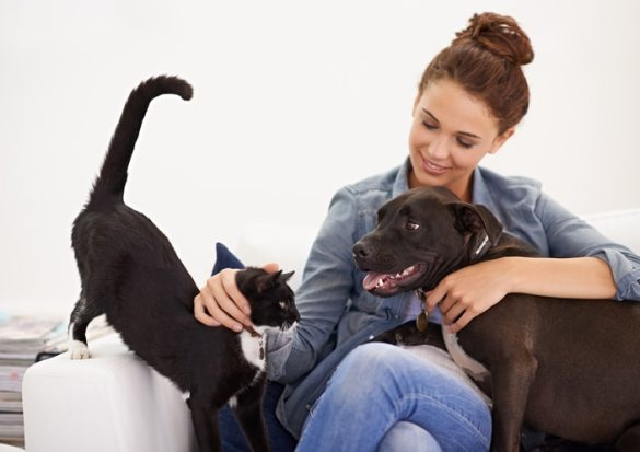 Convivencia entre personas y mascotas