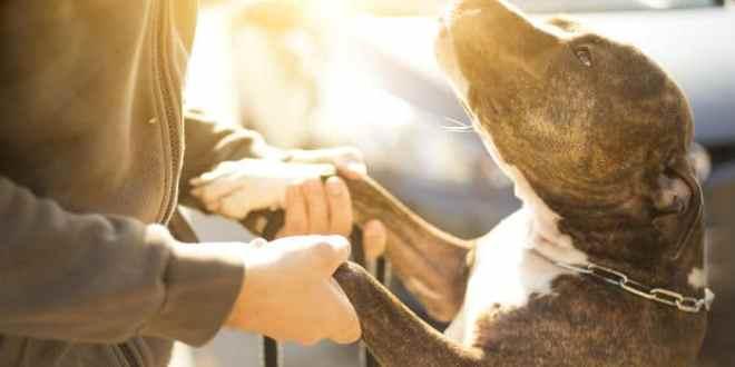 Ansiedad por separación en perros: síntomas y tratamiento