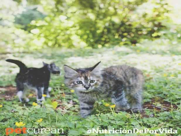 mitos alimentacion gatos