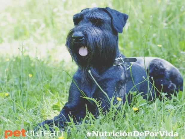 mitos alimentación perro