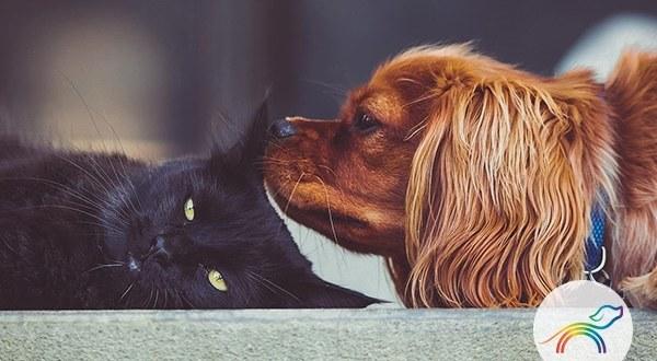 ArcoírisPets, donde recordar tus mascotas