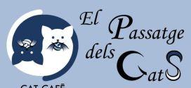 Passatge dels gats: el primer cat café de Valencia