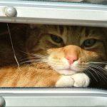 proteger a tu gato del calor