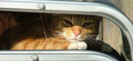 10 consejos para proteger a tu gato del calor