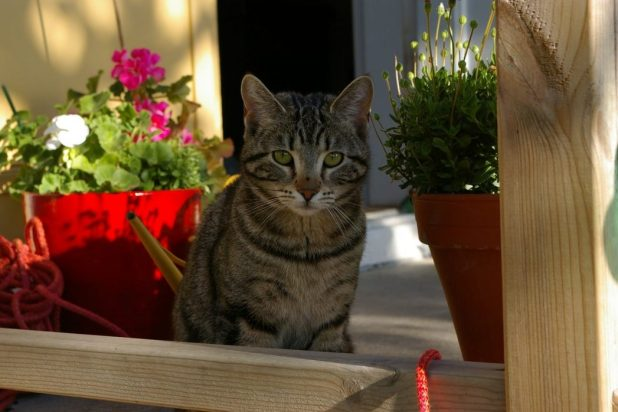 proteger a tu gato del sol