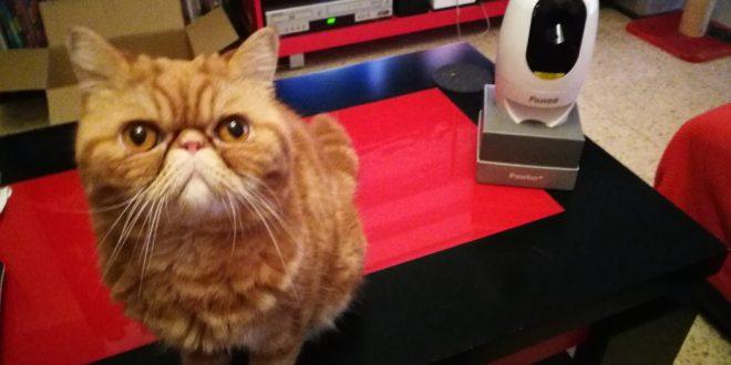 PAWBO+: tecnología para disfrute de tu mascota